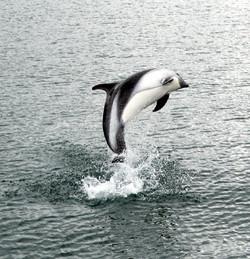 galeria delfines