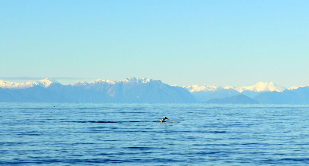 Delfines Playa del Coo