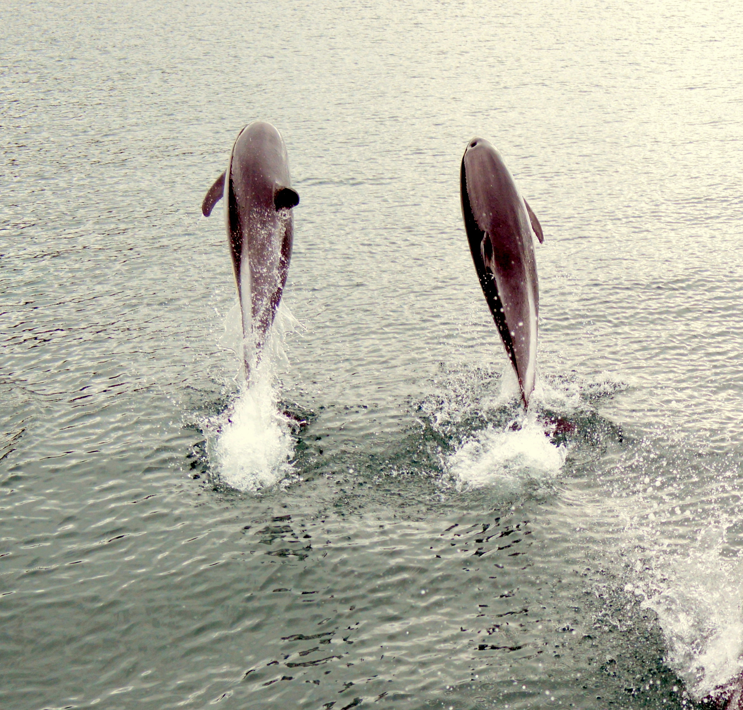 galeria delfines 3