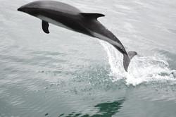 galeria delfines 4