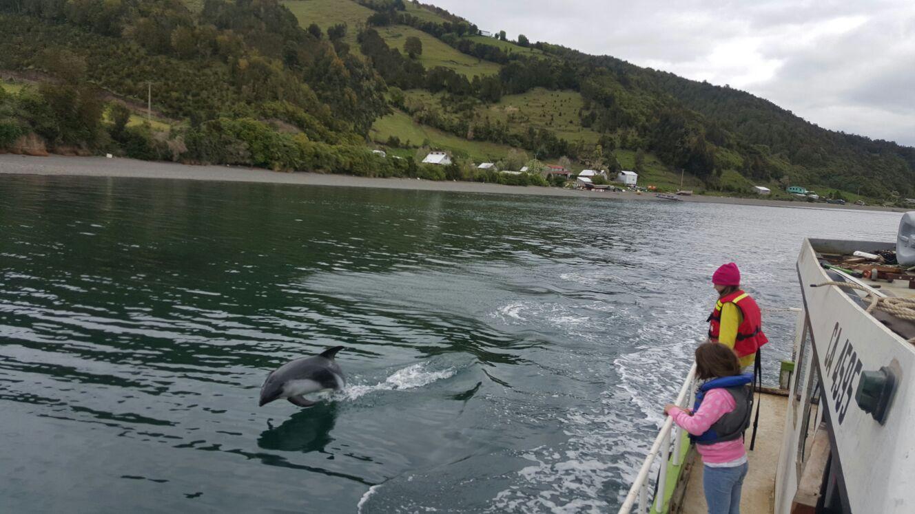 galeria delfines 5