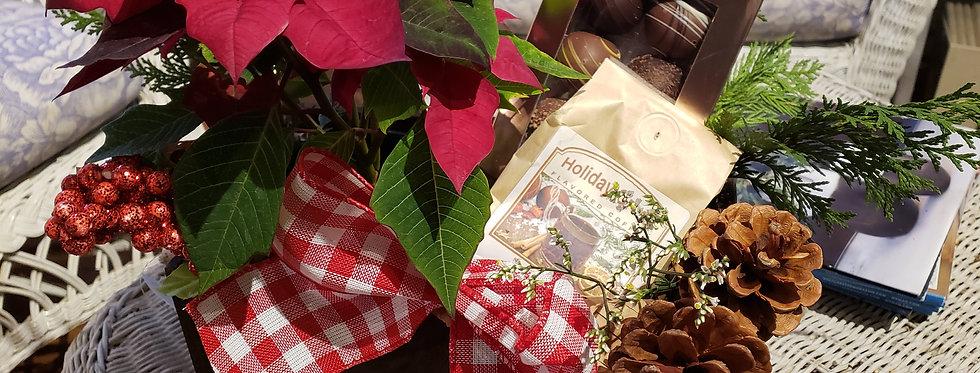 Poinsettia Heavenly Delight Gift