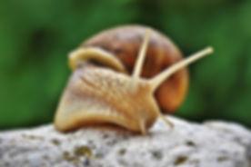 snail-4345504_1920.jpg