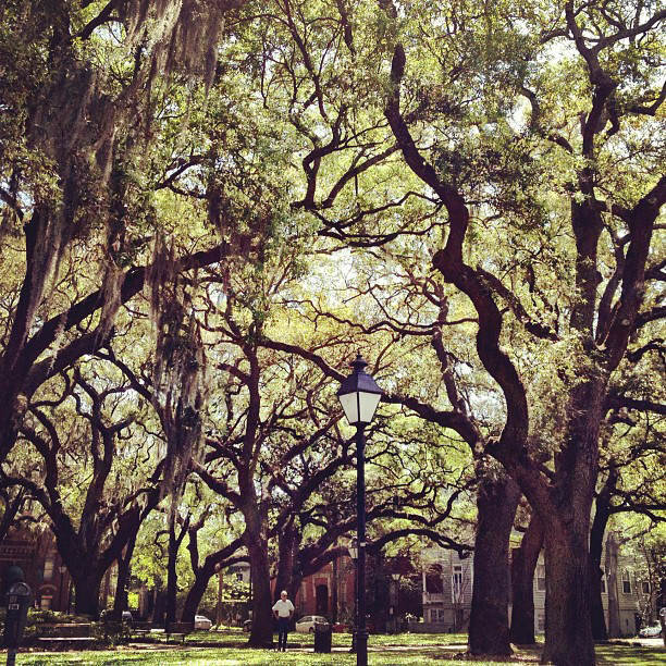 Oaks Savannah_7031016013_o.jpg
