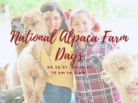 National Alpaca Farm Days Coming This Fall
