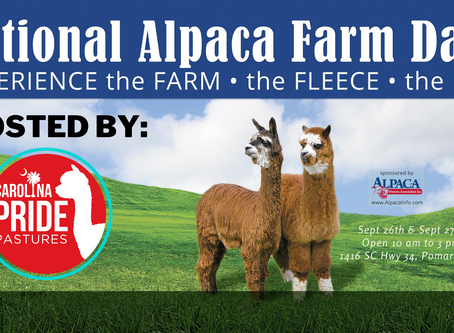 National Alpaca Farm Days......Ready, Set, Go!