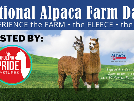 National Alpaca Farm Days......Ready, Set, Go!
