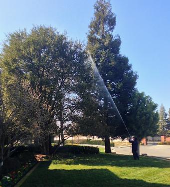 weed abatement control tree