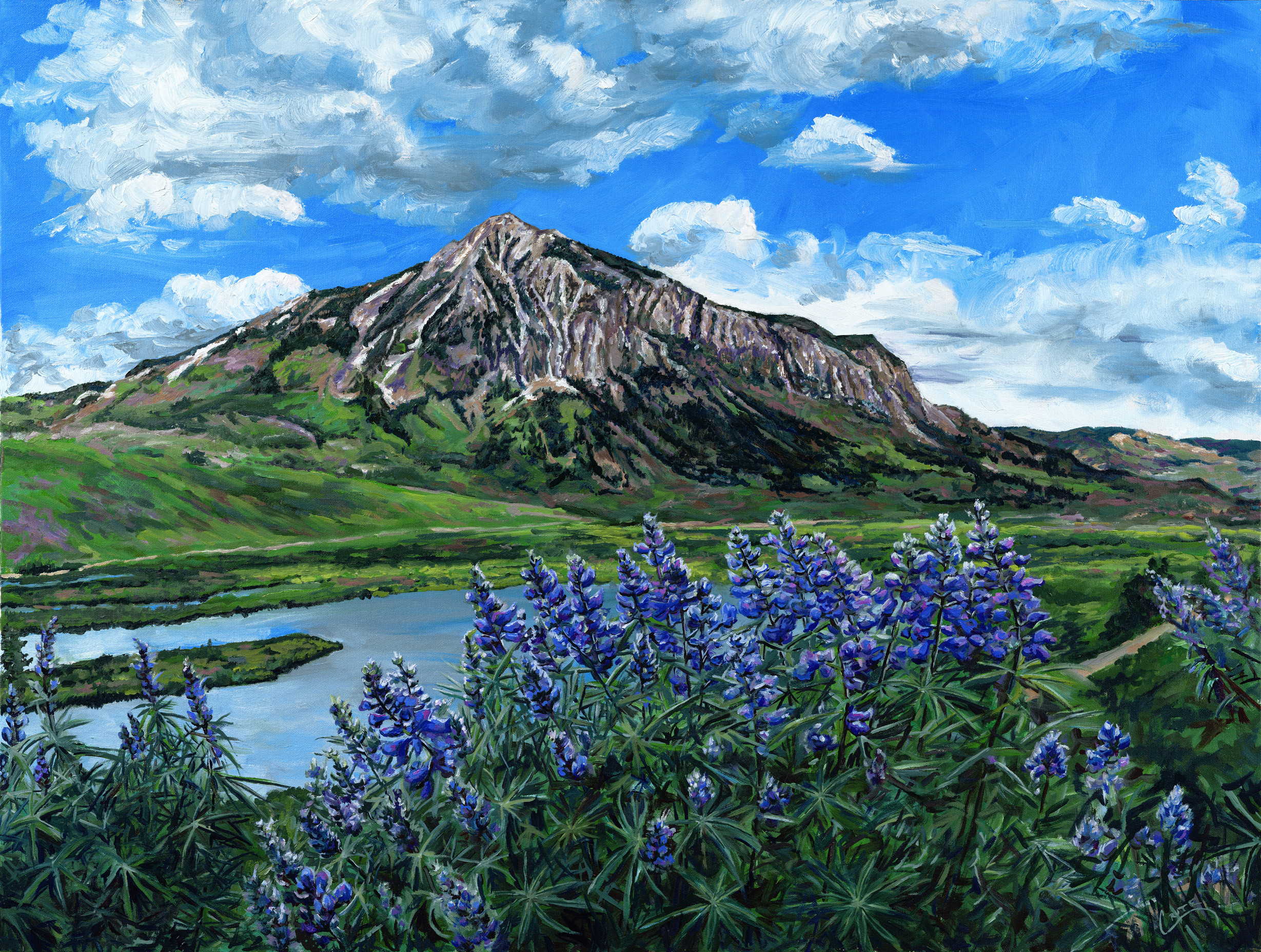 Butte Lupine