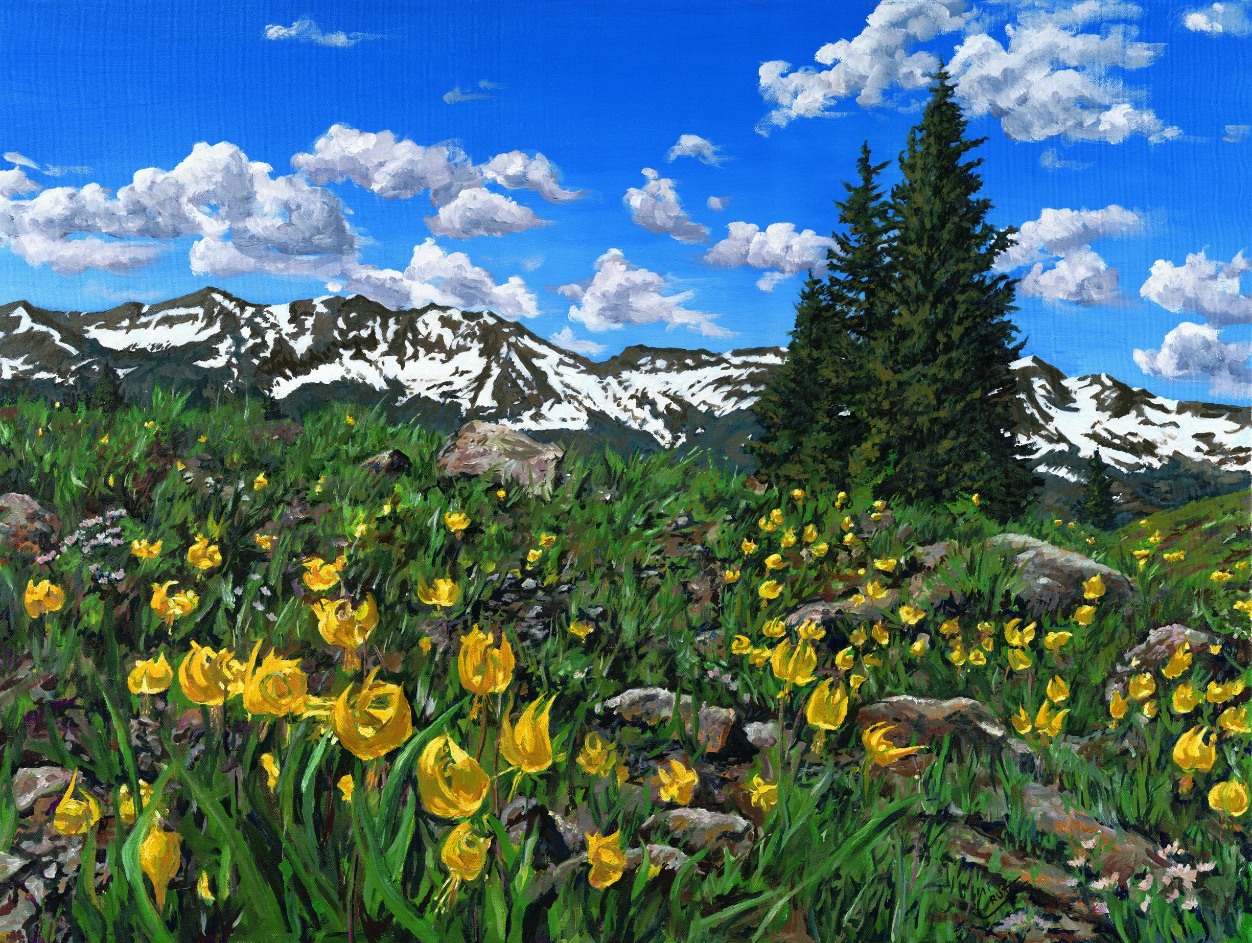 Irwin Glacier Lilies