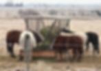 Screen Shot 2020-04-03 at 11.57.10 AM.pn