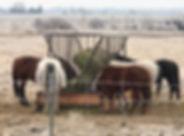 hay feeder.jpg
