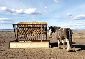 horse feeder w:horse.jpg