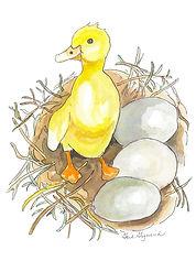 First to Quack.JPG