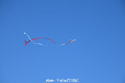 Cerf-volant, méduse du ciel