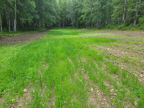 Wasilla Cover crop pic overview 71921.jpg