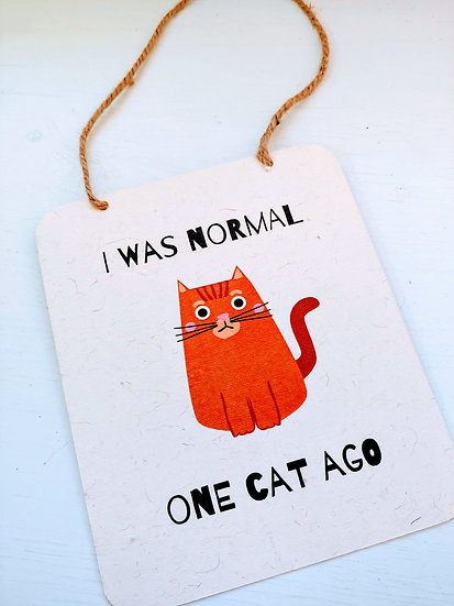 I was normal one cat ago
