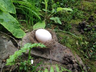L'œuf est dans le nid... Je répète... The egg is in the nest