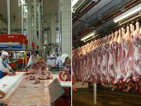 🇫🇷 Le ministre de l'Agriculture annonce un renforcement des contrôles dans les abattoirs en France