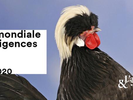 BON PLAN GRATUIT ET MERVEILLEUX : JOURNÉE MONDIALE DES INTELLIGENCES ANIMALES À PARIS