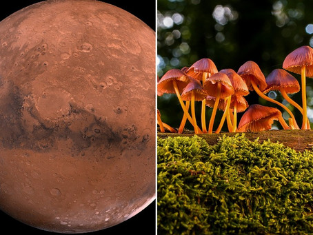 🌚 La Nasa : des habitations végétales en mycelium de champignons sur Mars et la Lune