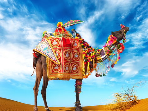 EGYPTE, KHÉOPS : TOURISTES PRIÉS DE DESCENDRE DU DOS DES CHAMEAUX