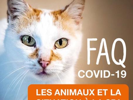 NON, LES ANIMAUX DE COMPAGNIE N'ATTRAPENT PAS LE CORONAVIRUS