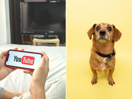 🕹 Youtube bannit de sa plateforme les vidéos de  faux sauvetages d'animaux