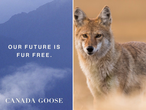 ✌️ Canada Goose arrête définitivement la fourrure