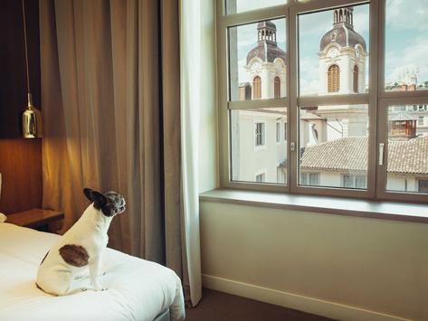 🐶 Les hôtels Intercontinental France ont du chien !