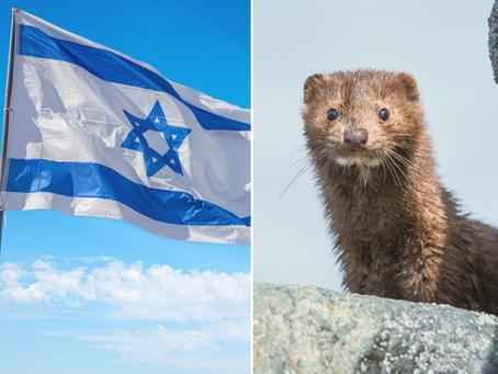 🇮🇱 Israël, le 1er pays au monde à interdire le commerce de toute la fourrure pour la mode