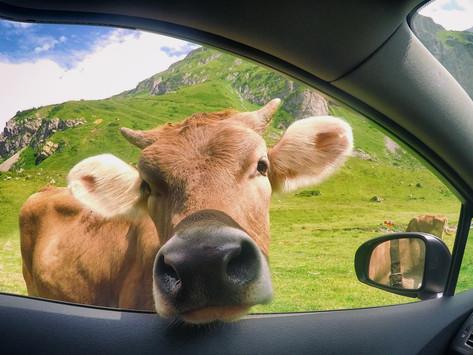 🚗 L'INDUSTRIE AUTOMOBILE CHANGE SON OFFRE : DIRECTION SANS MATIÈRES ANIMALES