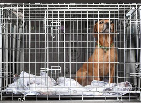 RISQUE DE VENTE DE SON ANIMAL À UN LABO VIA LE DÉCRET DU 17 MARS 2020