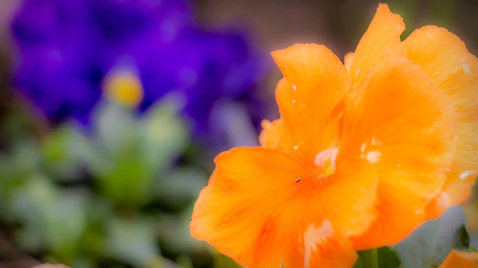 Orange_Blue.jpg