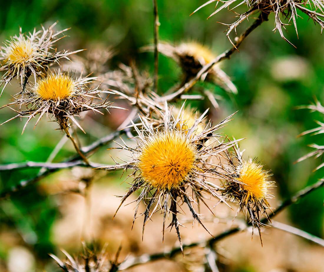 The Flower of the Desert.jpg