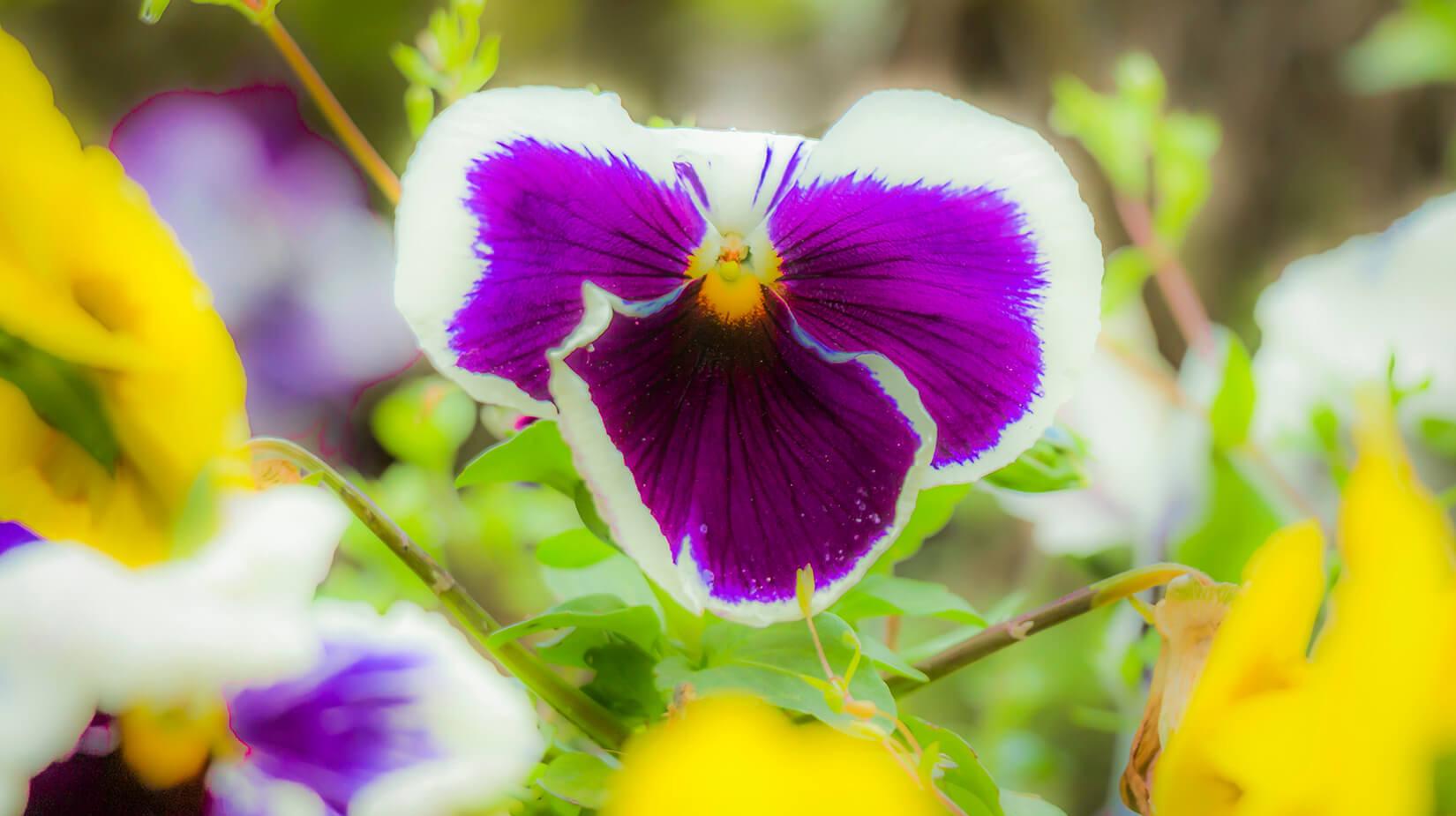 Purple_Yellow.jpg