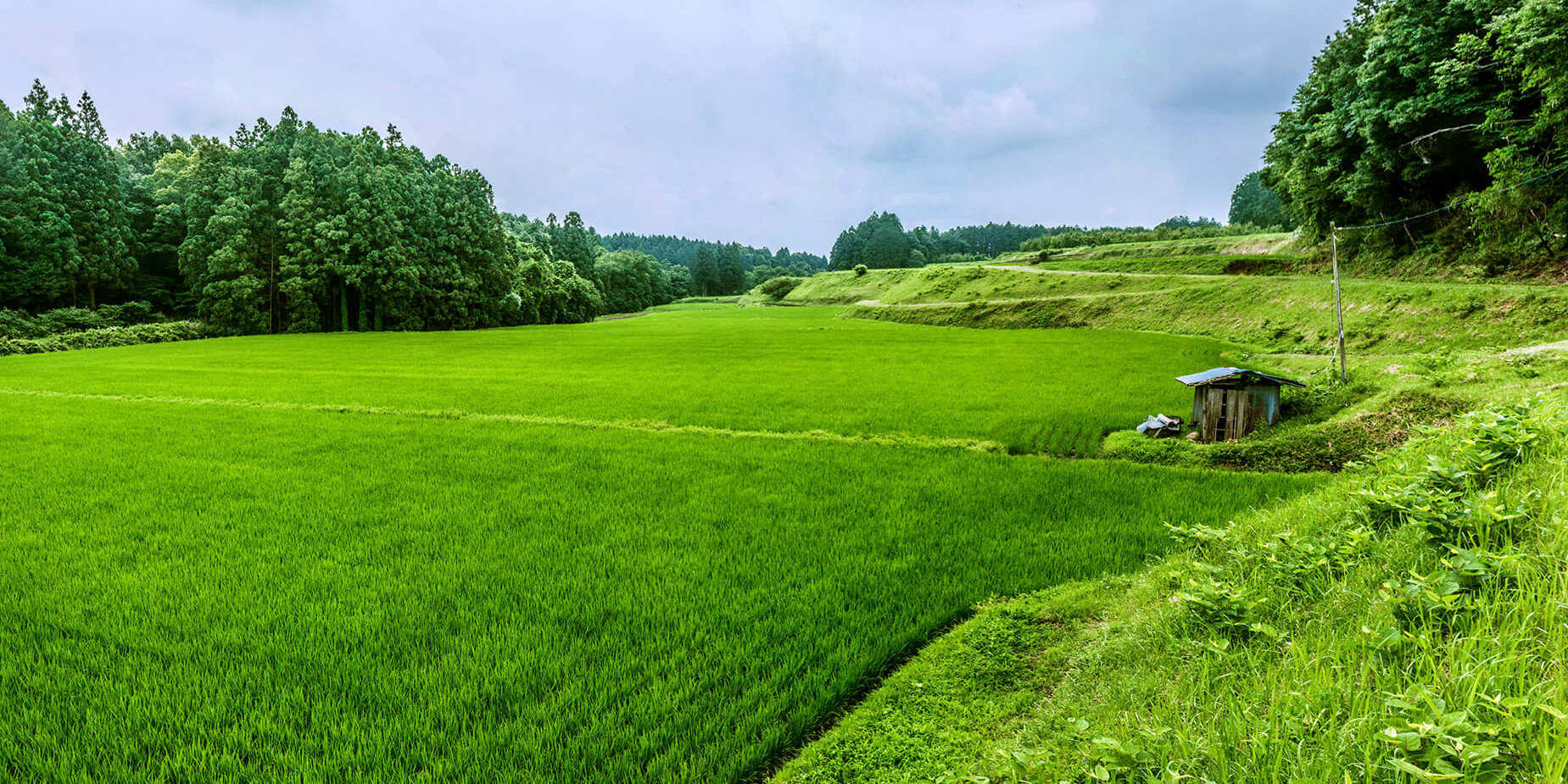 Japan - Rice Field in Fukushima Prefecture