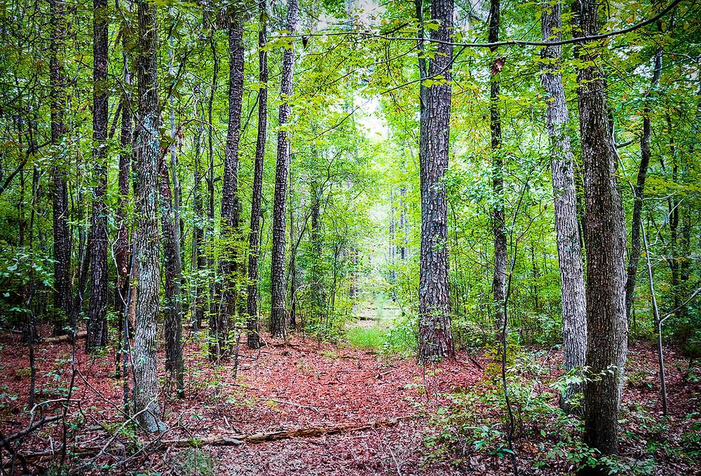 bosque árboles verde hojas rojas
