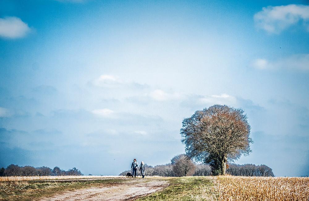 Pareja caminando con perro en paisaje idílico con árbol y cielo azul