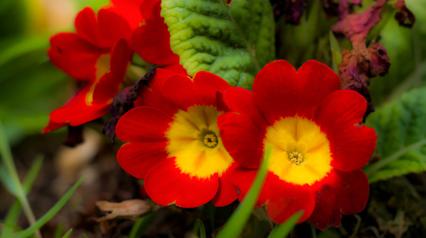 Red_Yellow.jpg