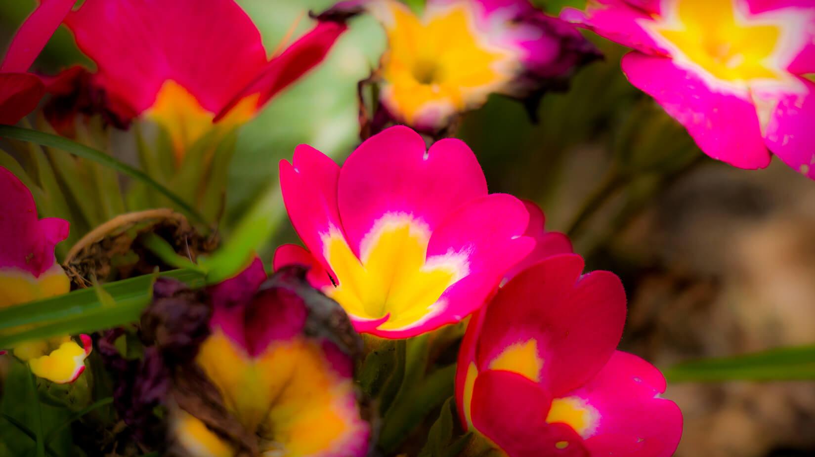 Pink_Yellow.jpg
