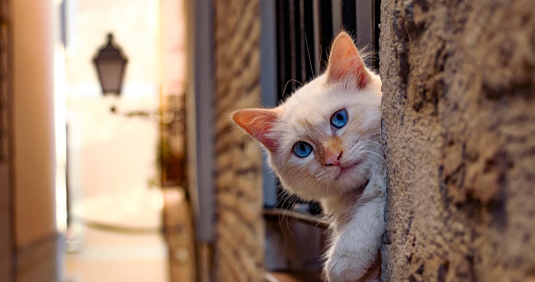 Spain - Mr Cat in Toledo