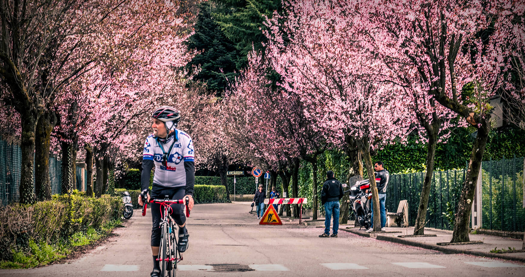 inda bike pink trees.jpg