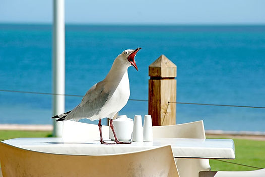 white-bird-opening-mouth-while-standing-