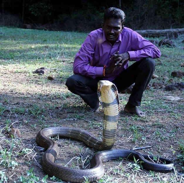 Умирающая кобра приползла к людям: и вот что они сделали