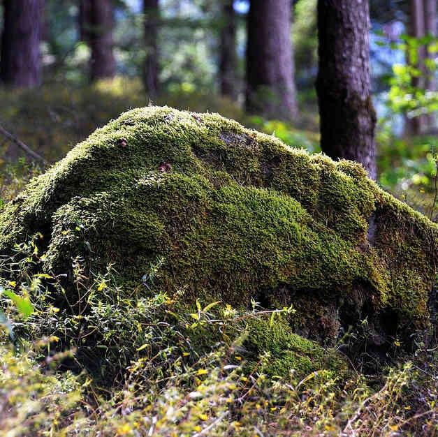Камень показался странным. Заглянув под него, были все удивлены