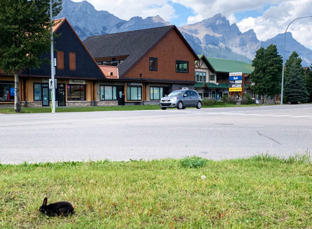 The Bunnies of Canmore