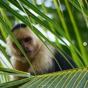 The Wild Life Of Corcovado