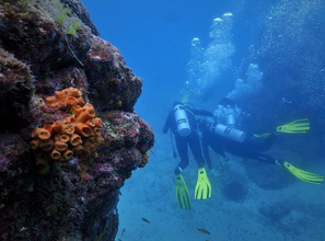 Diving In Drake Bay