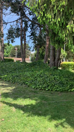 Minoru Park in Richmond, British Columbia